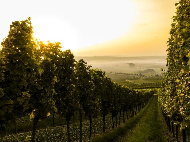 Minderheitsbeteiligung Weingut gesucht